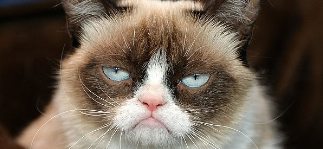 The grumpy cat movie trailer is the best worst thing youll see the grumpy cat movie trailer is the best worst thing youll see today thecheapjerseys Choice Image