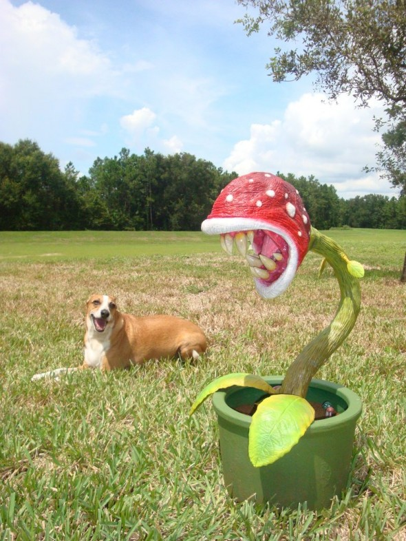 Real Life Piranha Plant From Super Mario Is Absolutely